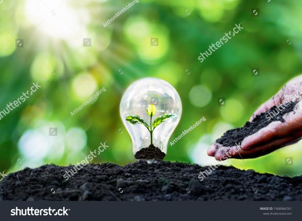 210311102252stock_photo_tree_grows_in_light_bulbs_energy_saving_and_environmental_concepts_on_earth_day_1568966761.jpg